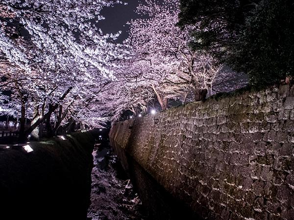 Kanazawa castle during sakura season