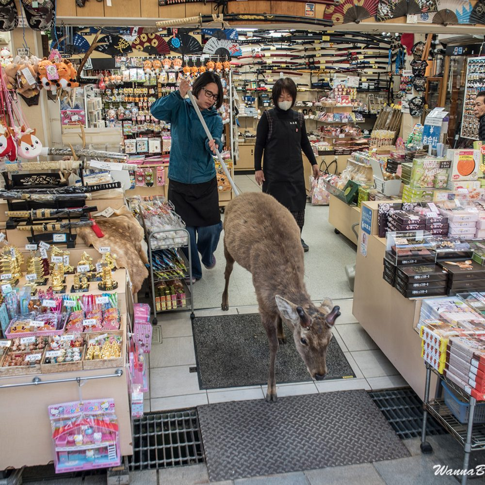 Nara deer getting kicked out of the shop