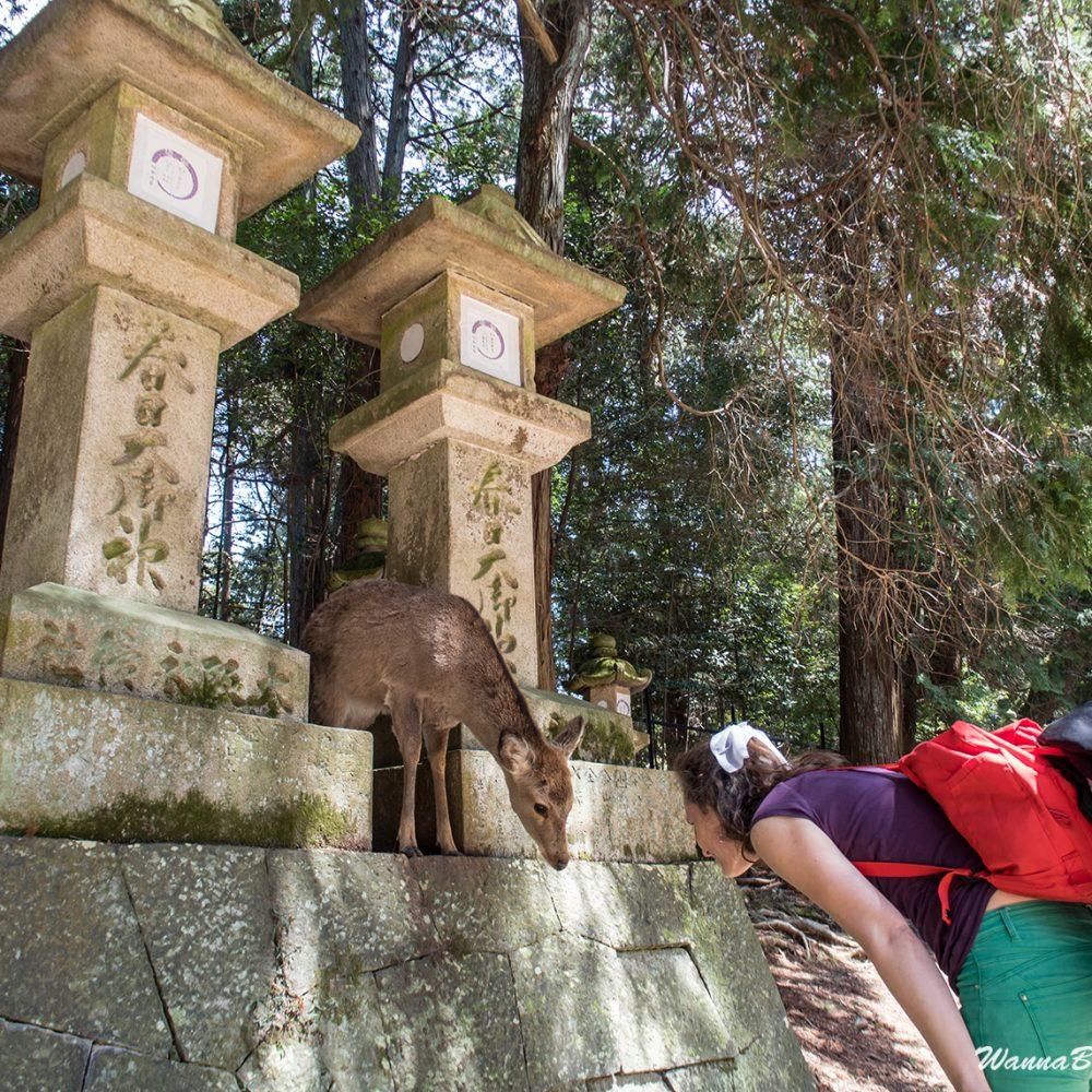 Nara deer bowing