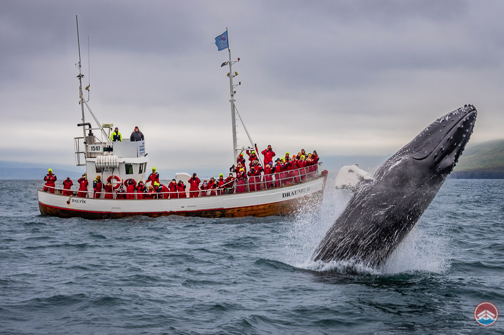 https://www.arcticseatours.is/en/tours/whale-watching-iceland/dalvik-whale-watching