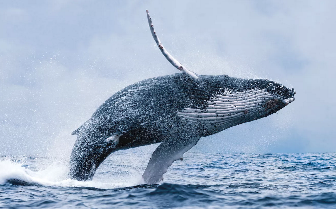 https://guidetoiceland.is/book-holiday-trips/best-value-whale-watching-trip
